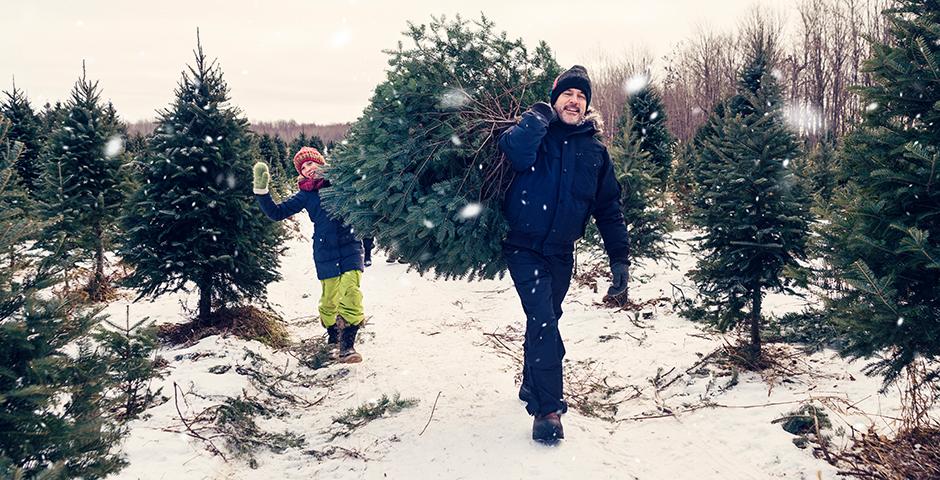 Leasing Weihnachtsbaum.Nachhaltige Weihnachtsbäume 21 Grad