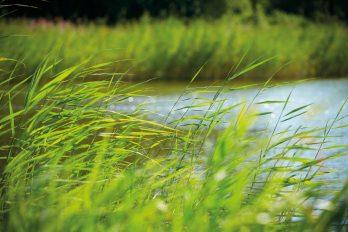 Ein See, umrahmt von Gräsern in kräftigem Grün. Eine aufwendige Abwasseraufbereitung ist erforderlich, damit es wieder in die Gewässer fließen darf.