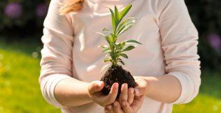 Mädchen mit Pflanze in den Händen
